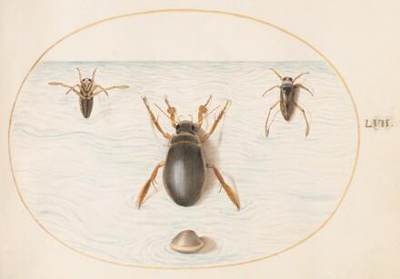 Animalia Aqvatilia et Cochiliata (Aqva): Plate LVII