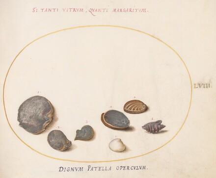 Animalia Aqvatilia et Cochiliata (Aqva): Plate LVIII