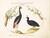 Animalia Volatilia et Amphibia (Aier): Plate X