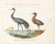 Animalia Volatilia et Amphibia (Aier): Plate XV