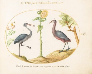 Animalia Volatilia et Amphibia (Aier): Plate XVI