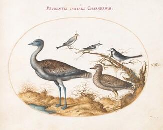 Animalia Volatilia et Amphibia (Aier): Plate XX