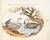 Animalia Volatilia et Amphibia (Aier): Plate XXIV