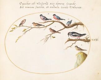 Animalia Volatilia et Amphibia (Aier): Plate XXV
