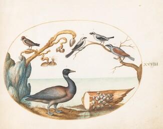 Animalia Volatilia et Amphibia (Aier): Plate XXVIII