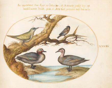Animalia Volatilia et Amphibia (Aier): Plate XXXII