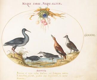 Animalia Volatilia et Amphibia (Aier): Plate XLIII