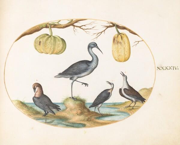 Animalia Volatilia et Amphibia (Aier): Plate XLIV