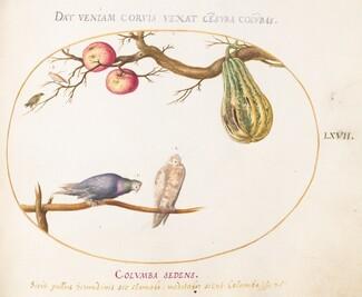 Animalia Volatilia et Amphibia (Aier): Plate LXVII