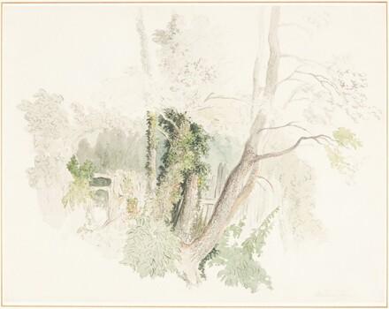 Trees at Beddington