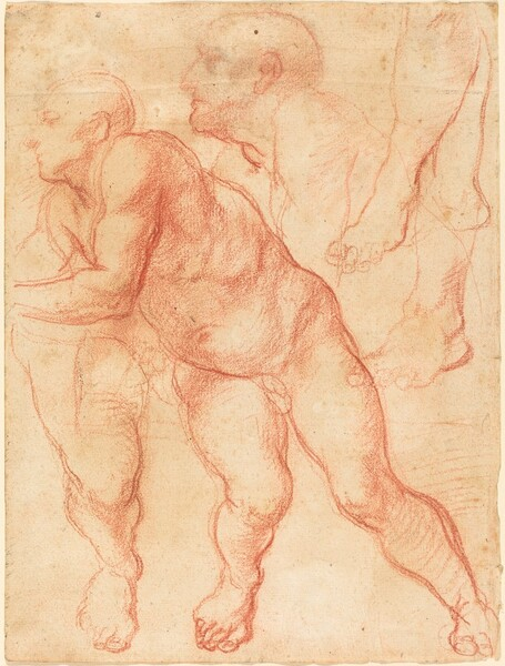 Studies of a Male Nude