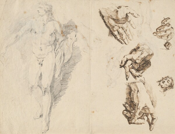 Apollo and Studies of the Artist's Own Hand [recto]