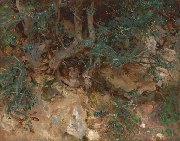 Valdemosa, Majorca: Thistles and Herbage on a Hillside