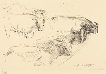 Cows (Kühe)