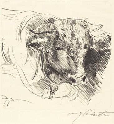 Head of a Steer (Stierkopf)