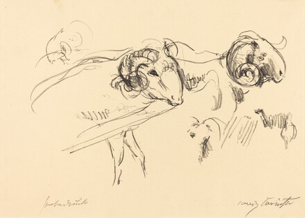 Rams (Schafböcke)