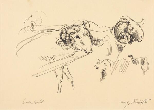 Schafböcke (Rams)