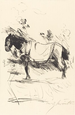 Riding-Horse (Reitpferd)
