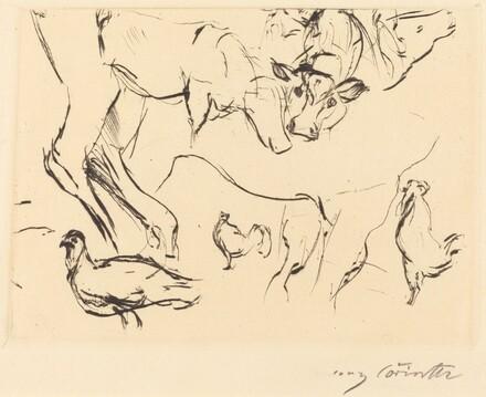 Animal Studies (Verschiedene Tierstudien)