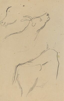 Studies of a Cow [verso]