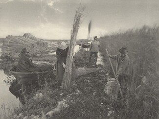 During the Reed-Harvest