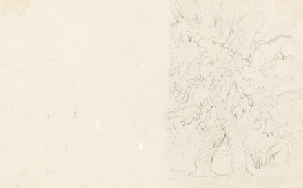 Trees [verso]