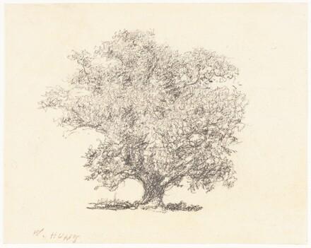 A Tree in Full-Leaf