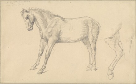 Studies of a Pony