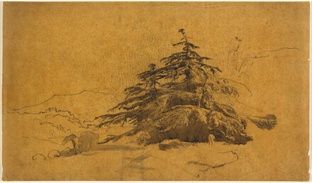 Study of Trees in a Landscape