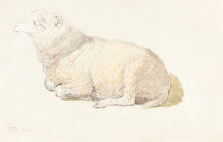 A Sheep Resting