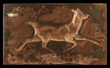 Virginia Deer