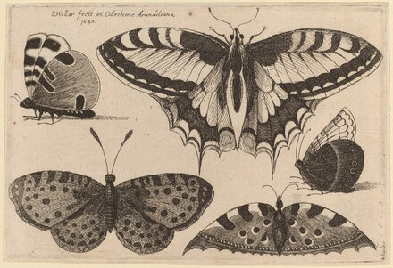 Five Butterflies