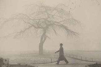 Tree/London