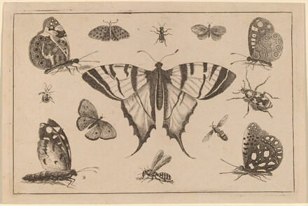 Swallow-tailed Butterfly and Twelve Other Insects