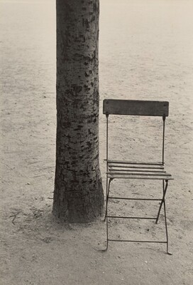 Tree and Chair/Paris