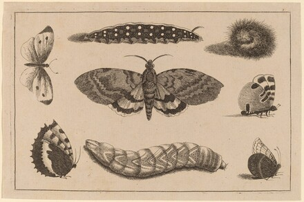 Three Caterpillars, a Moth, and Four Butterflies