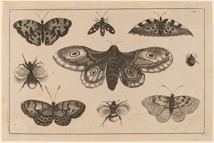 Moth, Butterflies, and Bees