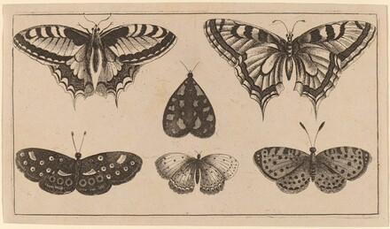 Five Butterflies and a Moth