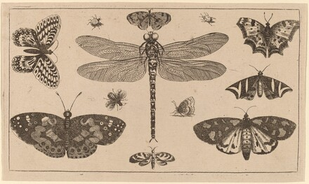 Dragonfly, Ladybirds, and Butterflies