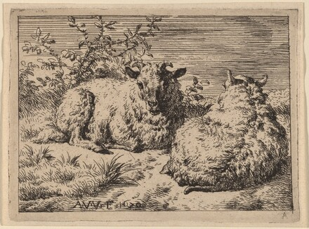 Two Recumbent Sheep