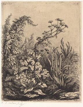 La petite berle aux liserons (Small Water-parsnip with Bindweed)