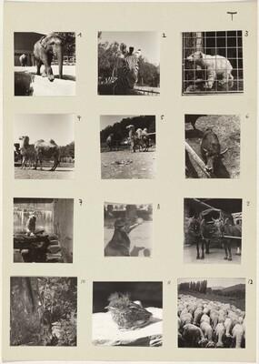 Die Tiere (Animals) 1-12