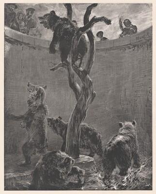 Bear Pit in Zoo