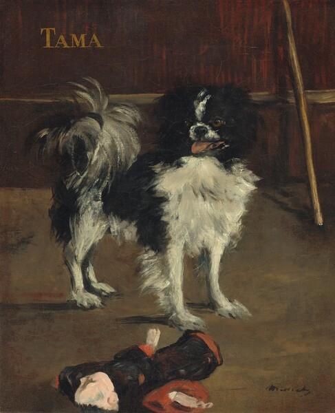 Tama, the Japanese Dog